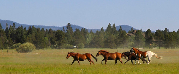 Horse round-up Sunriver